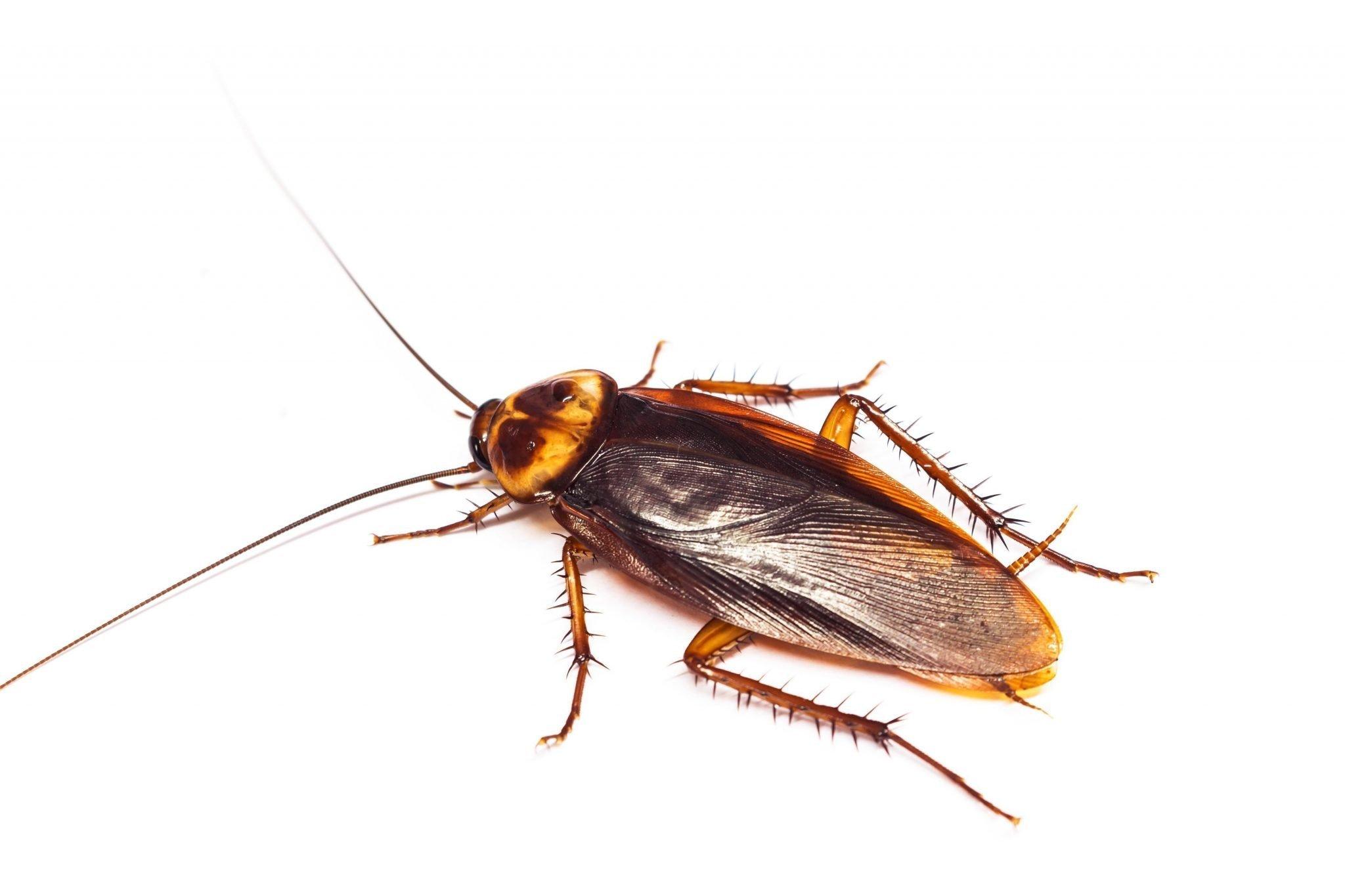 Is it a Hack, or is it a Bug?
